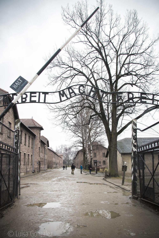 01-Auschwitz-LGGP-2015