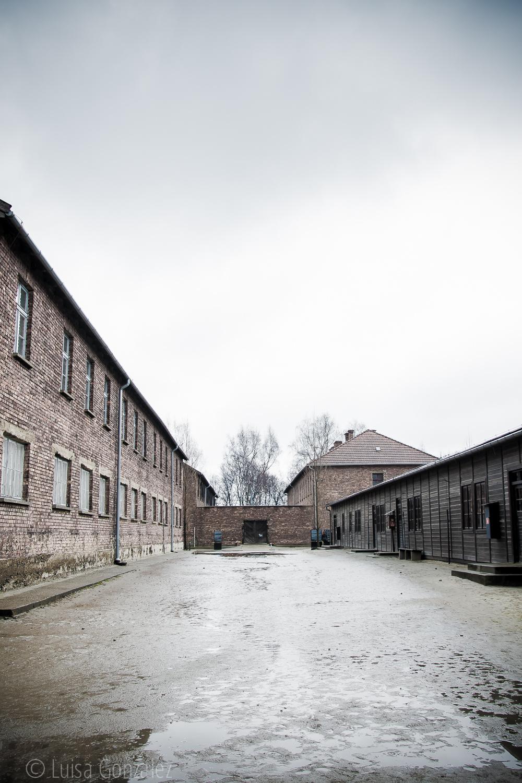 04-Auschwitz-LGGP-2015