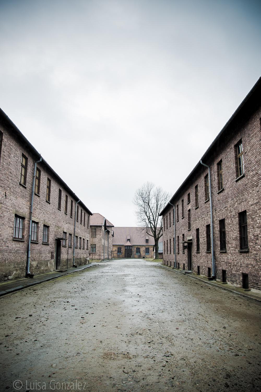 06-Auschwitz-LGGP-2015