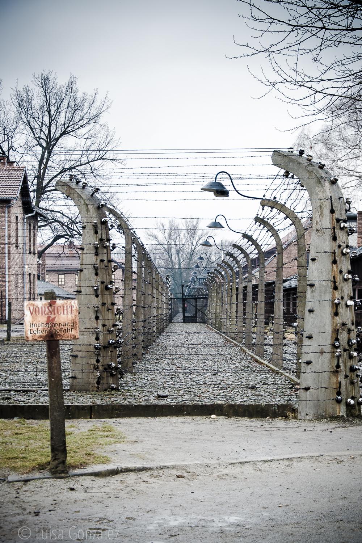 10-Auschwitz-LGGP-2015