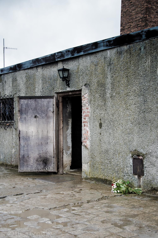 11-Auschwitz-LGGP-2015
